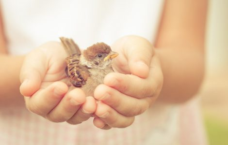 a young girl gently holds a tiny baby bird in her hand